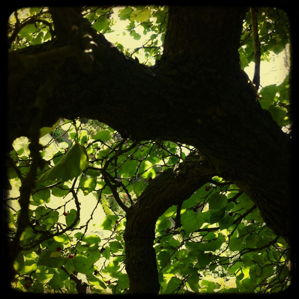 The soft protection of atree